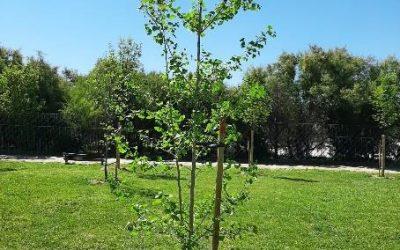 Nuevas plantaciones arbóreas en la ciudad